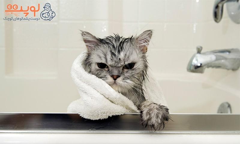 گربه عصبانی با حوله