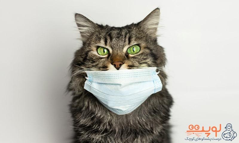 گربه با ماسک