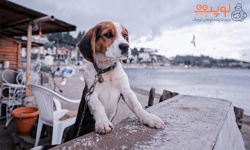 سگ در فضای باز