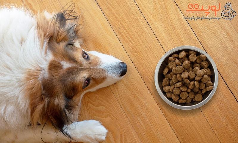 بدغذایی سگ