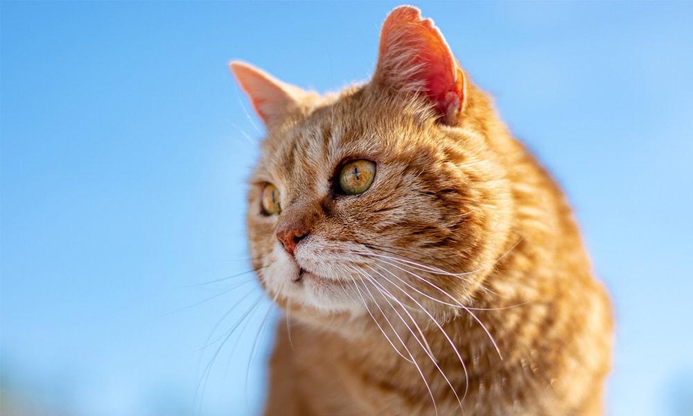 طول عمر گربه ها