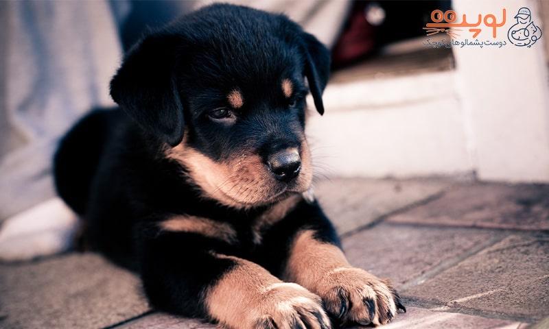 استرس در سگ