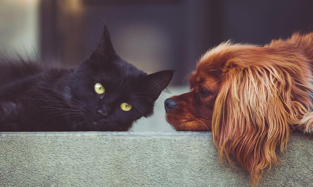 کرونا و افزایش سرپرستان حیوانات خانگی