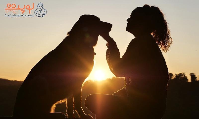 ارتباط بهتر با سگ ها