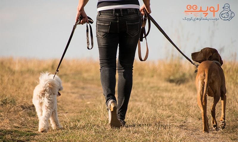 سگ در حال قدم زدن با قلاده