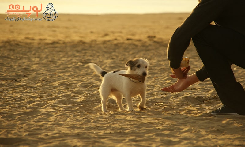 سگ در ساحل