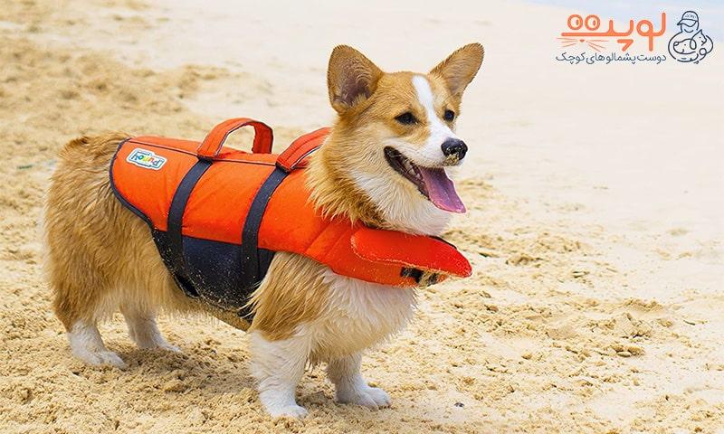 سگ با جلیقه نجات