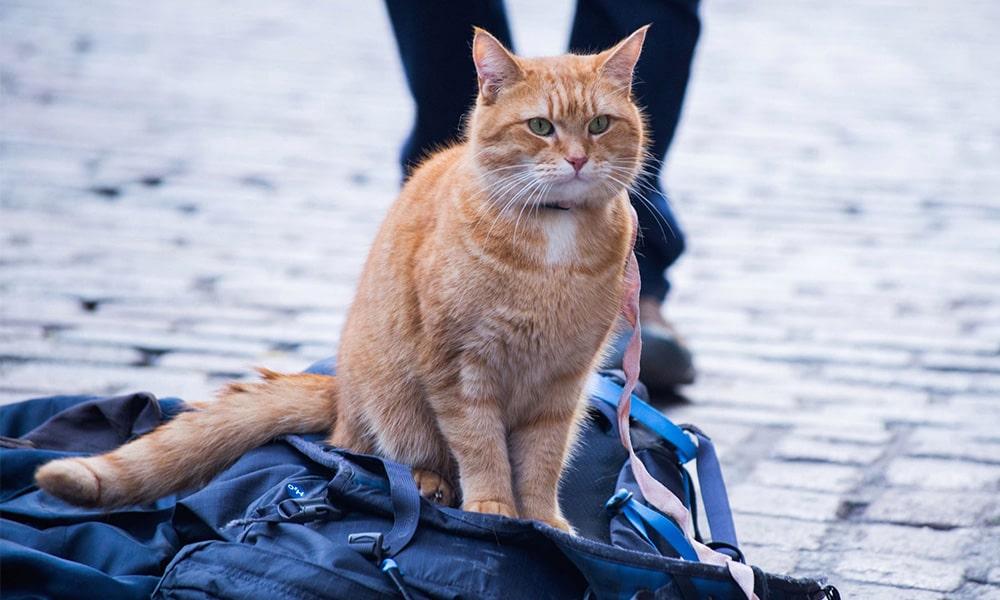 رفتار صحیح با گربه های خیابانی