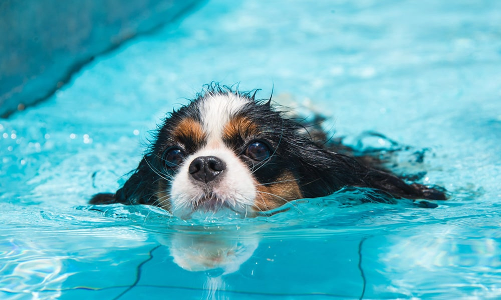 ارتباط سگ ها و آب