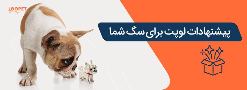 07 special offer dog min 1