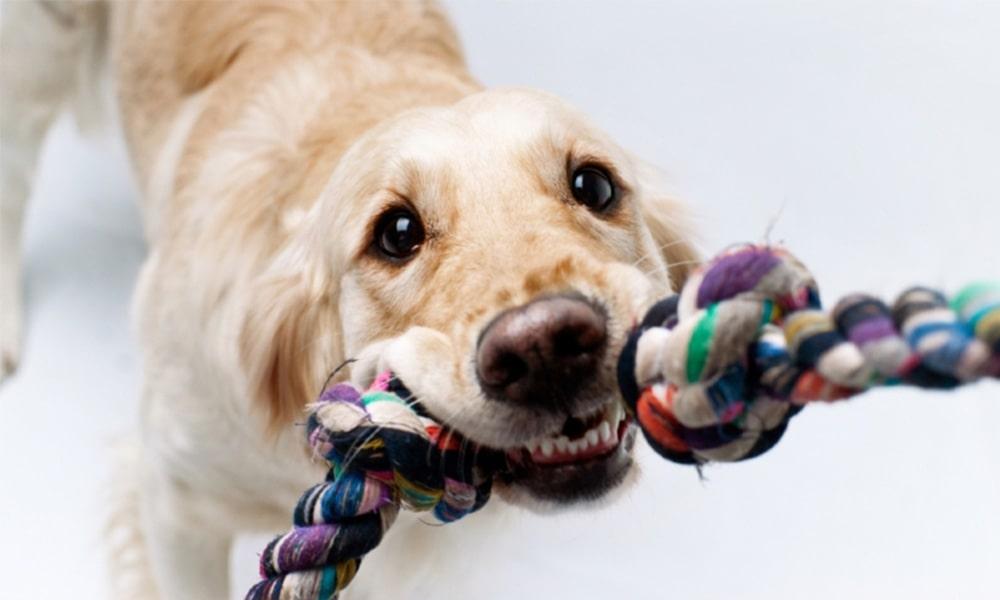 بازی و سرگرمی برای سگ