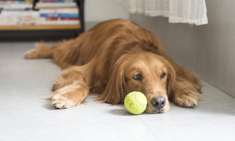 خستگی و بی حوصلگی در سگ ها