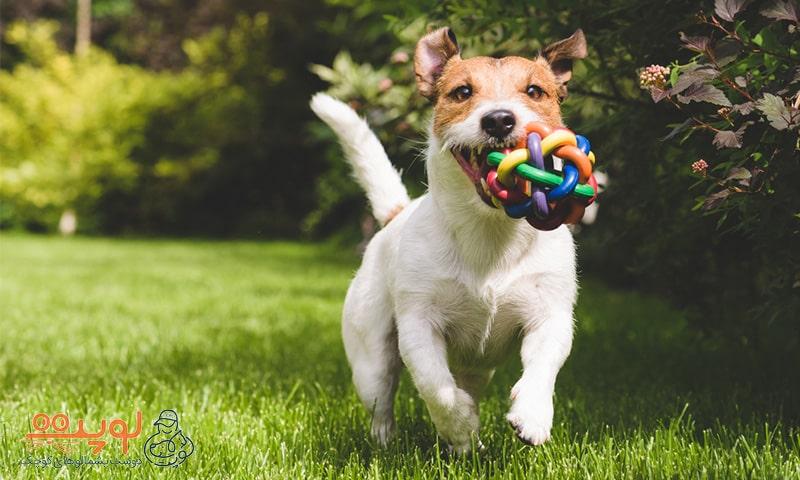 """سگ درحال بازی """"پیداش کن!"""""""