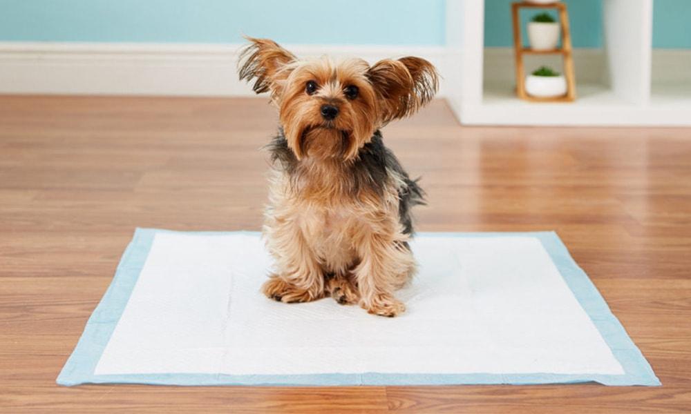آموزش جای دستشویی به سگ
