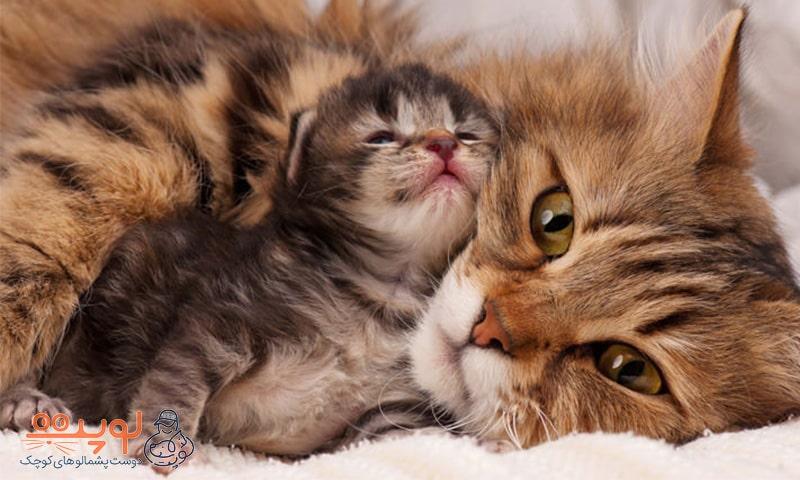 گربه و بچهگربه