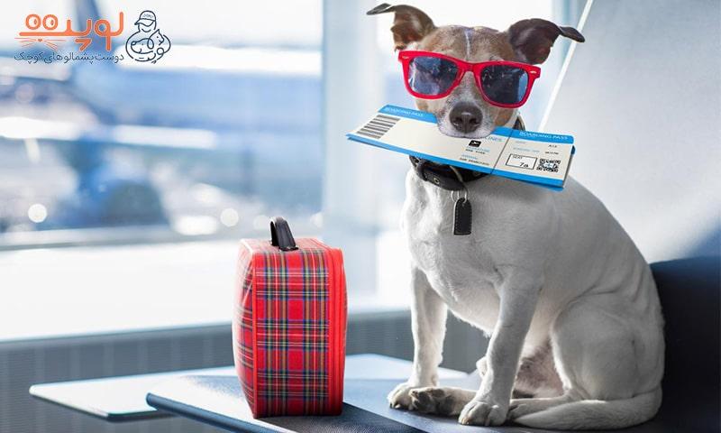 سگ در سفر