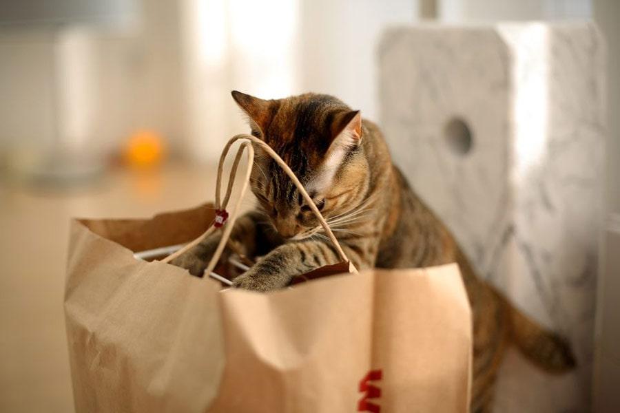 غذای برای گربه