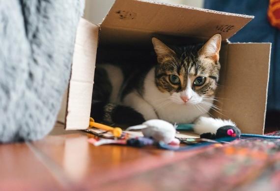 اسباببازی برای گربه