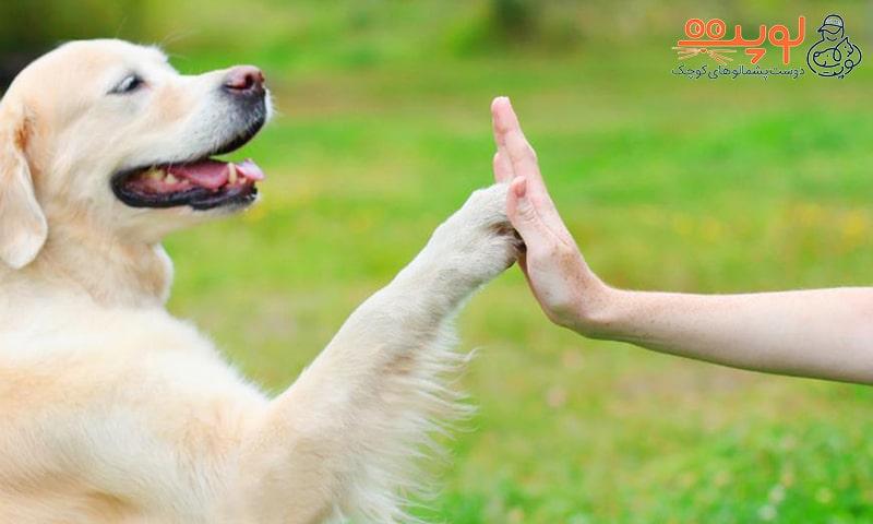 دلیل رفتار دوستانه سگ ها