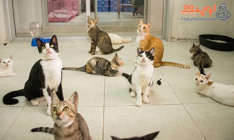 واگذاری حیوانات خانگی