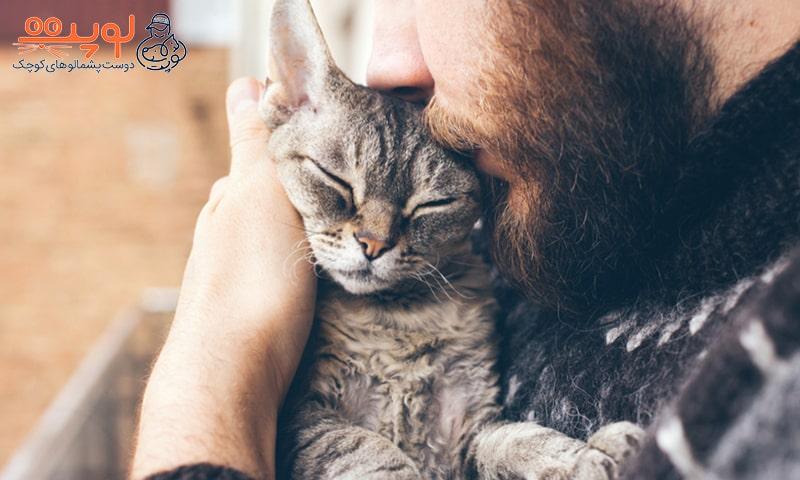 بهبود رابطه با گربه