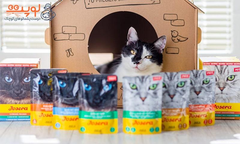 معرفی انواع غذای گربه جوسرا