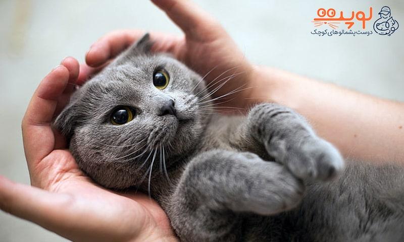 نگهداری از گربه