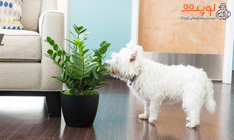 گیاهان سمی برای سگ و گربه