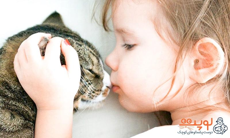 نگهداری گربه و سلامتی بدن