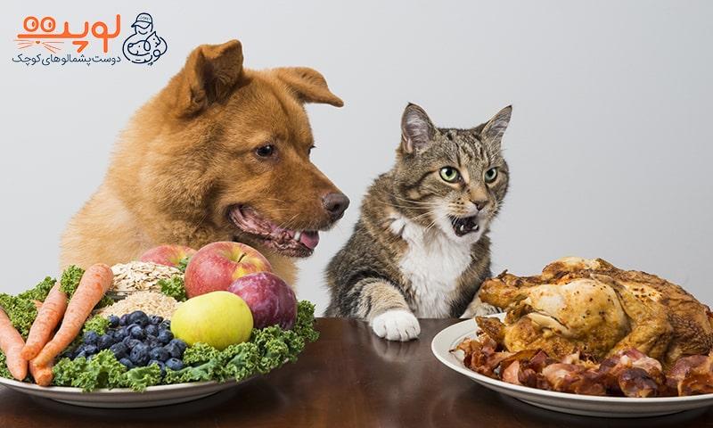 11 خوراکی ممنوعه برای سگ و گربه
