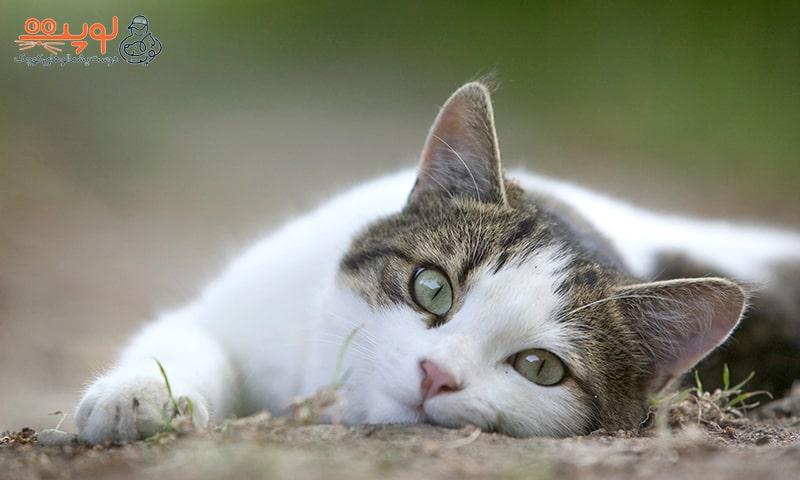 داشتن گربه در خانه