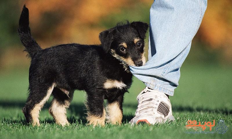 حیوانات خانگی برای کودکان