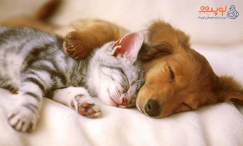 نگهداری سگ و گربه